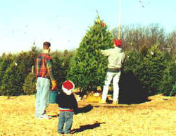 quality evergreen christmas trees